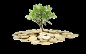Expert - Seed Funding